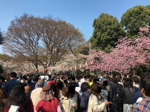 【画像あり】上野公園にひとりお花見にきたンゴww