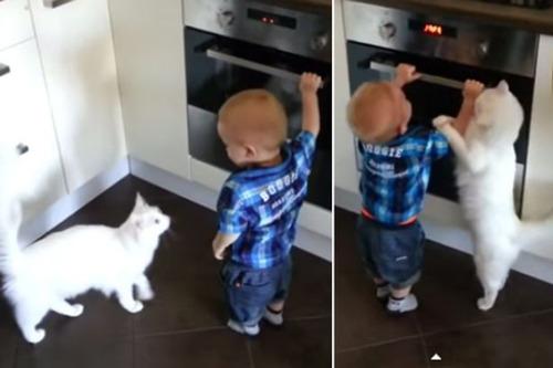 【画像】オーブンで危ない遊びをする赤ちゃんを飼い猫が引き止める