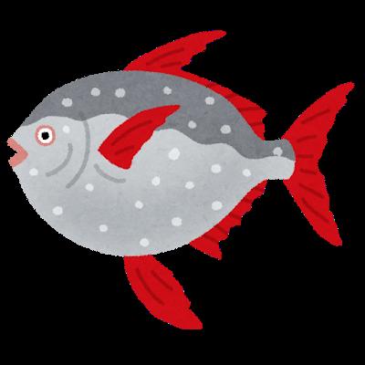 fish_akamanbou
