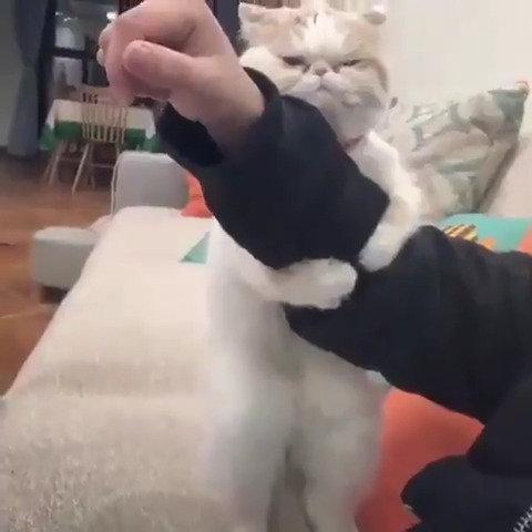 猫がワイの手を離してくれないんやが??どうすればええんや??