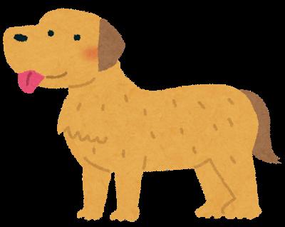 生前の犬の毛で友人が素敵なものを作ってくれた話