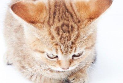 婚約者に一緒に住む前に飼ってる猫を手放せと強く言われた話のオチ
