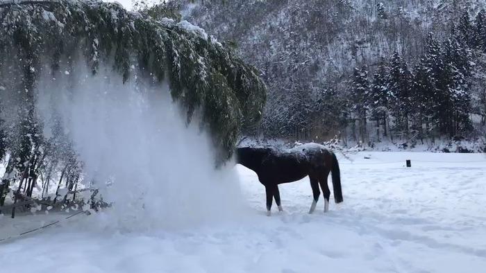 【ほっこり】お馬さん雪を落として遊ぶ!!