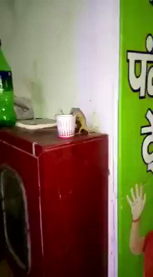 【衝撃】インドのヤモリ、チャイを飲むwwwww