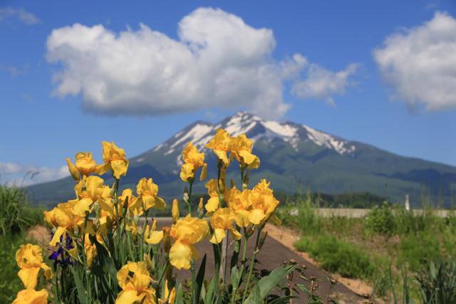 5:26花菖蒲と岩木山
