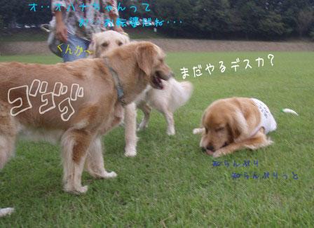 駆け回ったお二人(犬)&マイペースな方(笑