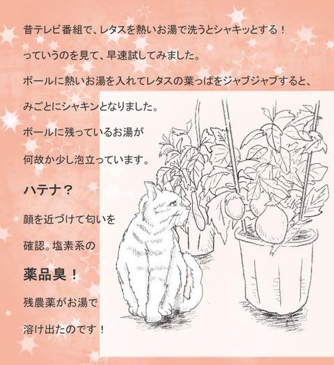 8月24日野菜の農薬