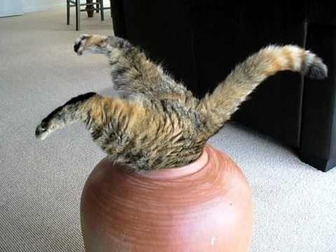 面白い猫00