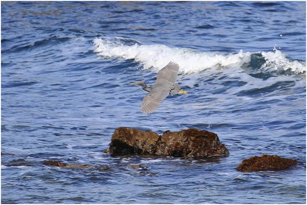 海クロサギ1