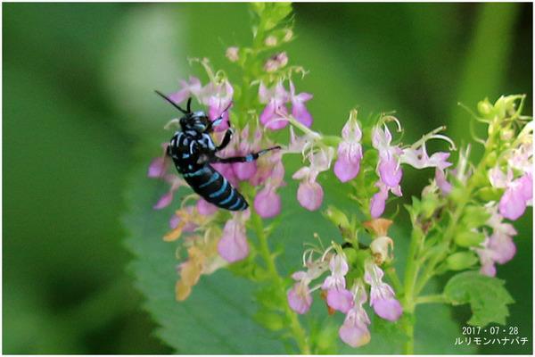 ハチと花2