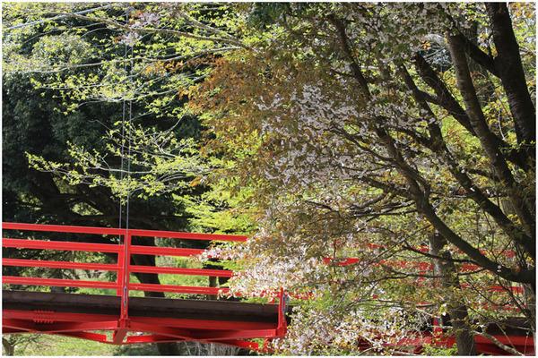 新緑と桜9