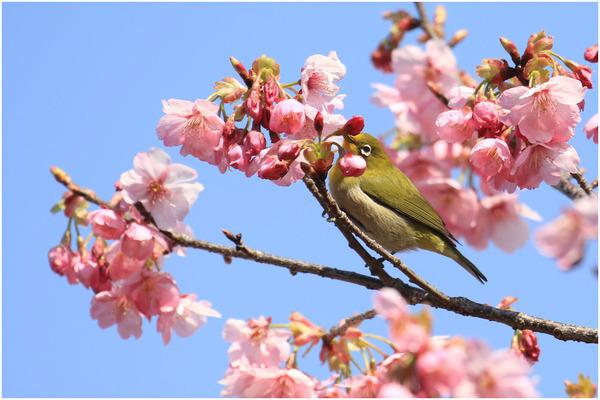 新緑と桜4