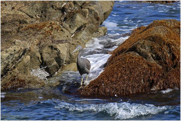 海クロサギ5