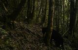 huila-reaparece-oso-de-anteojos-despues-de-15-anos-539426