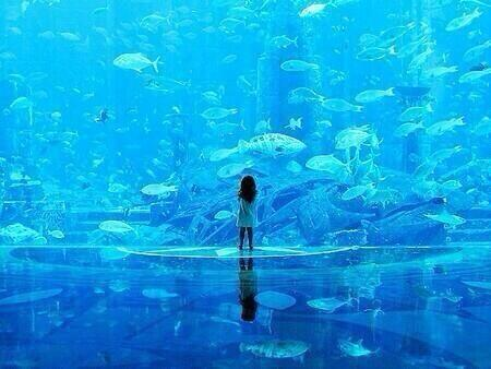 ドバイの水族館