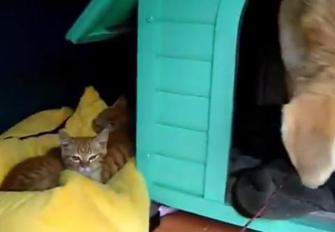 犬小屋の隣に子猫のベッドができた
