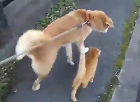 散歩タイムはいつでも一緒