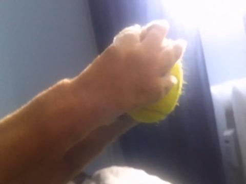 手の素晴らしさに気づいた犬