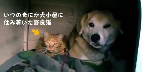 いつのまにか犬小屋に住み着いていた野良猫