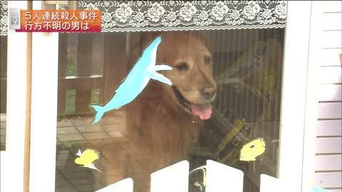 保見光成容疑者が飼っていた犬のオリーブ