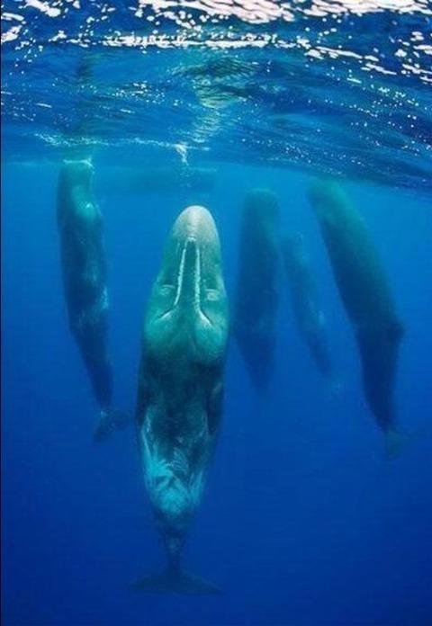 クジラの寝る姿