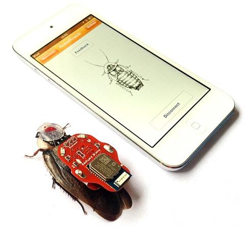 ゴキブリを操縦可能にする学習キット「RoboRoach」をとりつけたゴキブリ