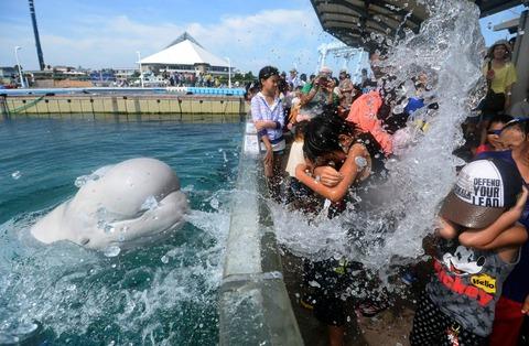 観客にむかって海水を口から噴射するシーパラダイスのシロイルカ