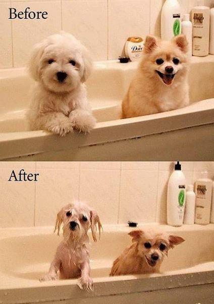 水にぬれてぺちゃんこになった犬