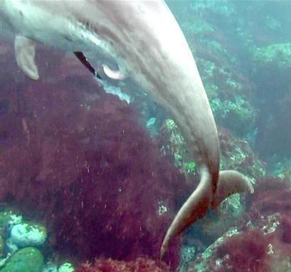 イルカの夢精