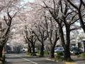midori picture 015