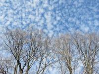 clouds-527684_640