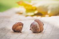 acorns-4572674_640
