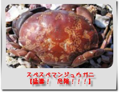 スベスベマンジュウガニの画像 p1_7