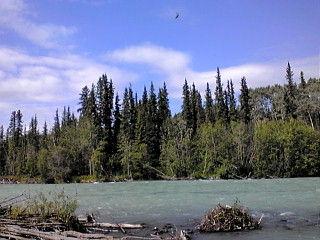 川と針葉樹