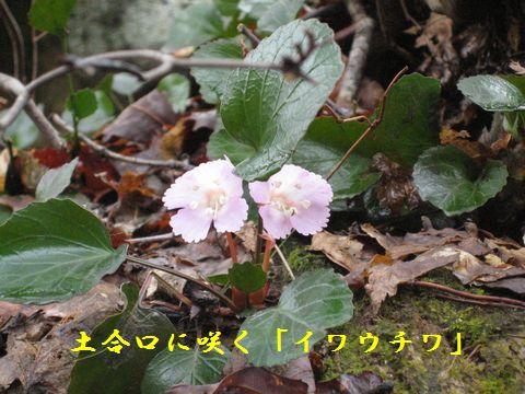 https://livedoor.blogimg.jp/owadahm/imgs/8/1/8158ddb8.jpg