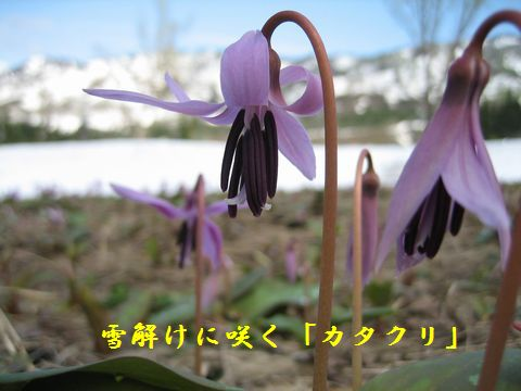 https://livedoor.blogimg.jp/owadahm/imgs/8/7/873afd82.jpg