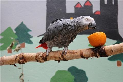 parrot-1168726_1920