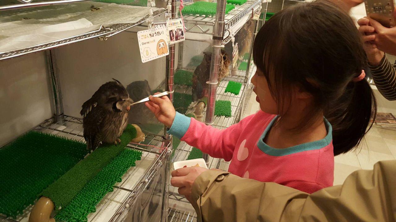 フクロウファンにはたまらない!フクロウの餌やり体験