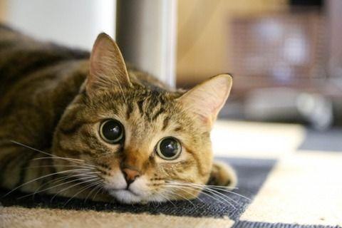 ずっと一緒だった20歳の愛猫が死んだ