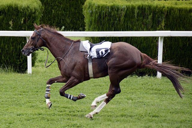 競馬できちがいみたいに儲けてたおっさん裁判に勝つ、ハズレ馬券分税金免除