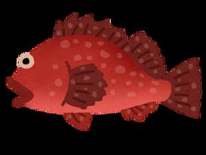fish_kasago