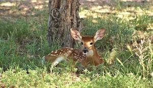 deer-2081638_640