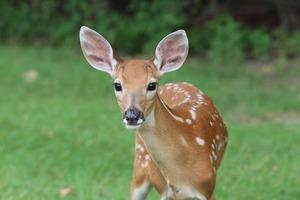 deer-2264354_640