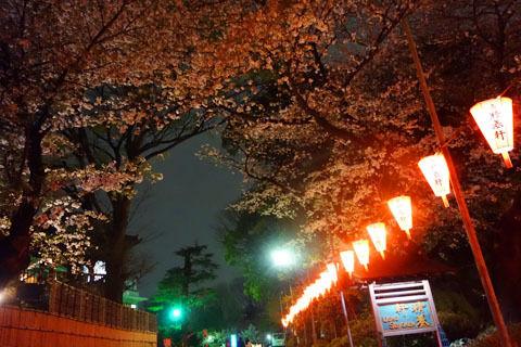 $尾山泰永の漫画生活-夜のお花見