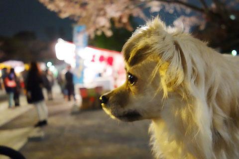 $尾山泰永の漫画生活-けんた夜のお花見