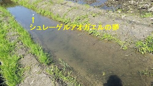 田んぼの横に作った遊水溝