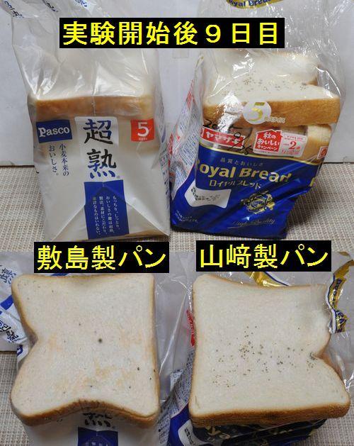 山崎パンもカビが生えました