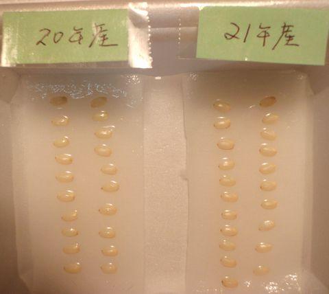 11月1日実験開始