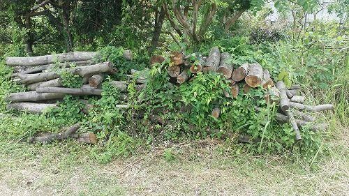 春に持ち帰った薪の材料の木