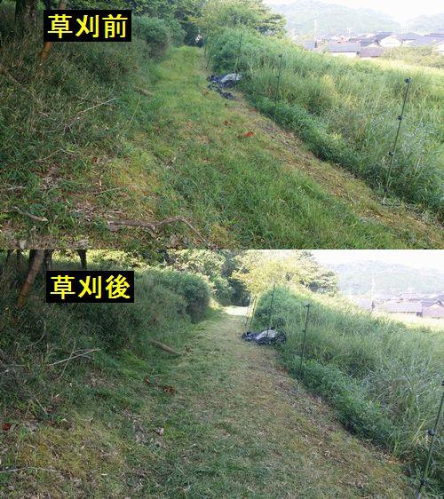 約50mの農道の草刈りをします